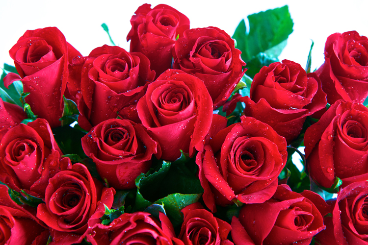 exceptional types of red roses Part - 3: exceptional types of red roses images