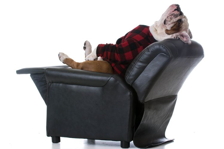 bulldog relaxing on comfy chair