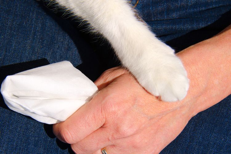 cat paw consoling human