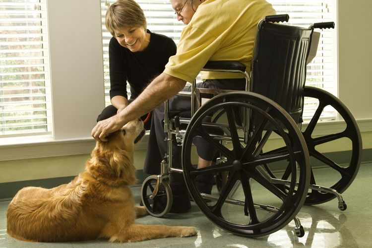 nursing home therapy dog