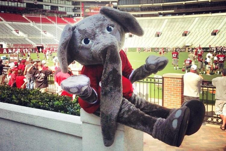 university of alabama mascot big al
