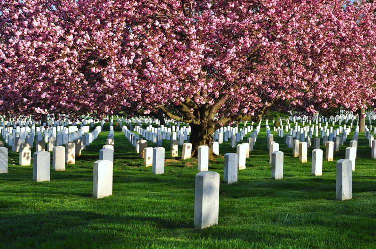 Super Memorial Day Reflections At Arlington National Cemetery Everplans Short Hairstyles For Black Women Fulllsitofus