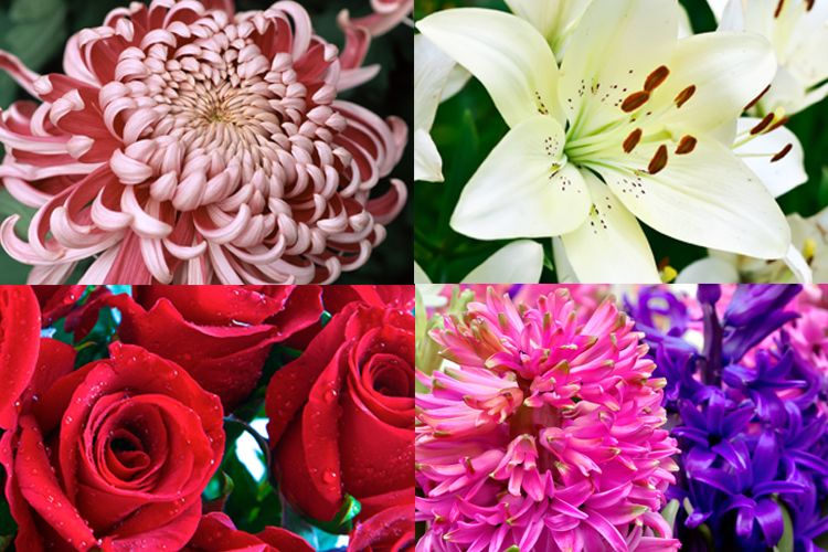 Types of flowers and meanings with pictures