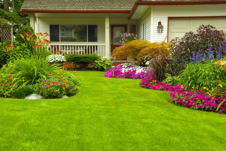 home landscape and yard