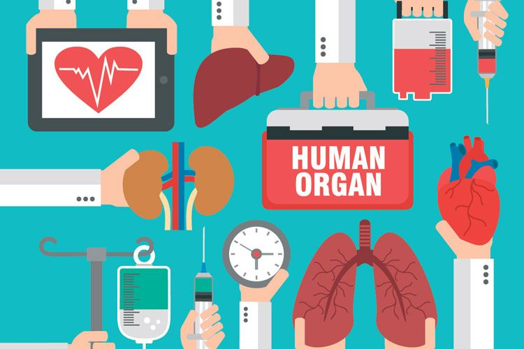 organ donation illustration