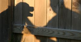 shadow of dog and man