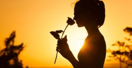 smelling rose at sunset